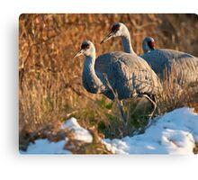 Sandhill Cranes in Snow Canvas Print