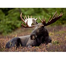 Funky Moose Photographic Print
