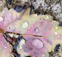 Rain drops Sticker
