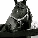 Equine Beauty by Bobbie Bonebrake