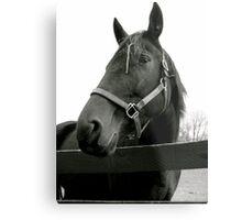 Equine Beauty Metal Print