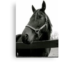 Equine Beauty Canvas Print