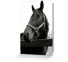 Equine Beauty Greeting Card