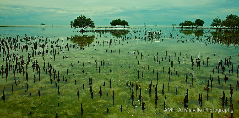 Ocean Mangroves - Moreton Island - Queensland by AMP  Al Melville Photography