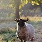 Sheep in Autumn by Christopher Cullen