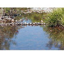 Williams River  Hunter Valley Photographic Print