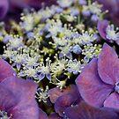 Purple by Dave Cauchi