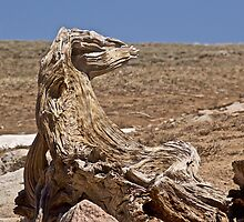 Log Creature by John Butler