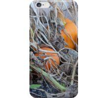 Squashed iPhone Case/Skin