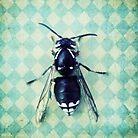 The hornet by Priska Wettstein
