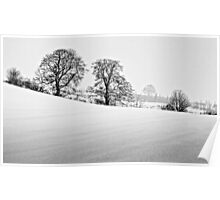 Winter Trees, County Durham. UK Poster