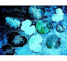 December's Garden 1 Photographic Print
