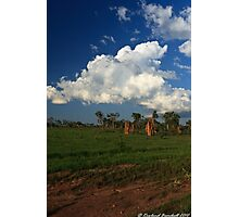 A rural scene Photographic Print
