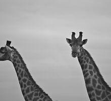 Giraffe 2 by sarahchamlee