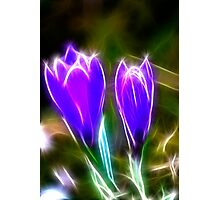 Sparkling Crocus Photographic Print