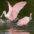 What???   You Don't Wear Pink..???? by Brenda Dow