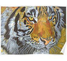 Study of a Tigress Poster