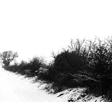 Winter Whiteout by scribblerjo