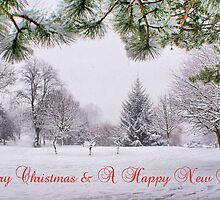 Greeting's Card ~ Merry Christmas & A Happy New Year ~ by Sandra Cockayne