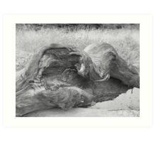 Dead tree. as driftwood.. Art Print