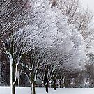Beautiful snow-laden trees in Hilly Fields Park  by John Gaffen
