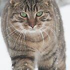 Snow Cat by simpsonvisuals