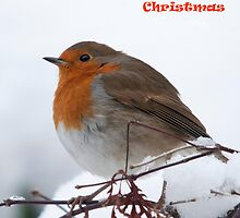robin card Merry Christmas  by Grandalf