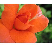 Zesty Rose Photographic Print