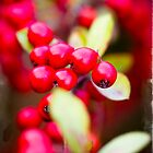 Red Berries by Minna  Waring