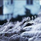 First Frost I by lallymac