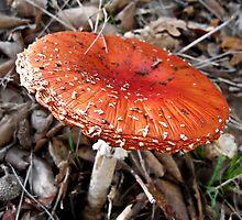 Mushroom II by Flávia Ferreira