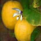 Sweet Lemon by Linda Cutche