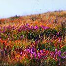 Wild Flowers of Wengen by Luke Griffin
