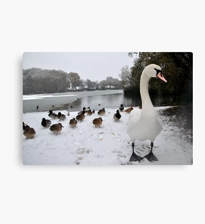 Don't Mess With Us! Canvas Print