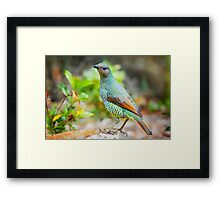 Sweet Bower.... Framed Print