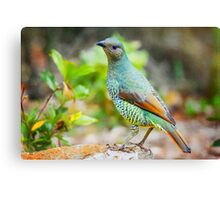 Sweet Bower.... Canvas Print