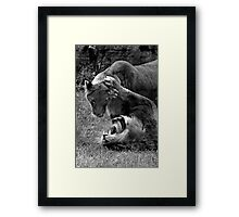 Play Fight Framed Print