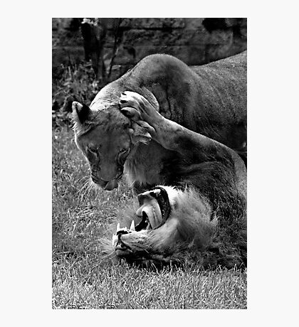 Play Fight Photographic Print