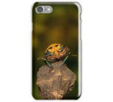 Orange stink bug 002 iPhone Case/Skin