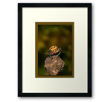 Orange stink bug 002 Framed Print