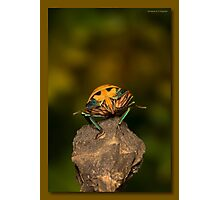 Orange stink bug 002 Photographic Print