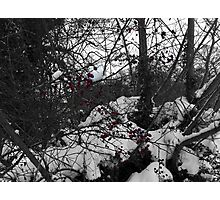red is the new black and white Photographic Print