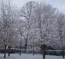 Snow laden trees by Wimburian