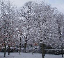 Snow laden trees by Wimburian