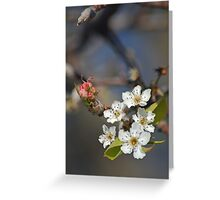 Blossom 01 Greeting Card