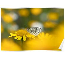 Butterfly on Gold Poster