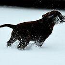 Walkin' in a winter wonderland by Alan Mattison