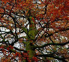 Healing Beech tree by Amanda Gazidis