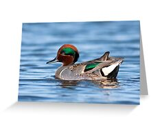 Green Winged Teal Portrait Greeting Card