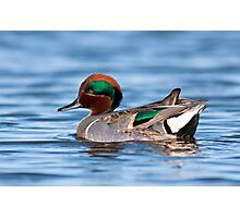 Green Winged Teal Portrait Photographic Print